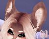 BRODY Doggie Pup Ears