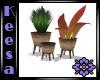 Kona Potted Plants