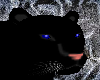 Midnight Panther
