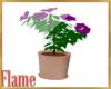 royal purple hibiscus