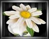 Daisy May - Daisy Hat