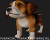 Sad Pablo-Puppy