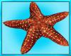 Attack Star Fish