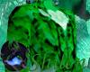 SHILEN Emerald Coat