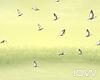 "Iv""Animated Birds"