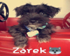 IvI Zarek -Pet-