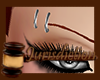 ⌡ Derivable Brows R