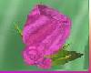 [TGUU] ROSE PIN PASSION