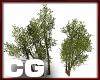 (CG) Park Tree Cluster