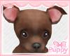 [Pup] Aubri Chihuahua
