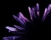 Fingerless purple lace