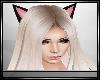 P| Black Cats Ears