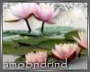 AM:: Pink Lotus Enh