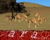 camellos grupo familia