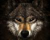 WolfDanceClub