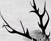 Black Antlers