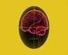 female helthy brain ^,^