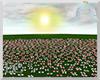 EC| Multi Rose Field