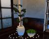 _LOFTY Plants_