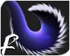 MIDNIGHT - Tail