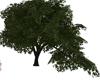 GREEN TREE (KL)