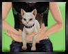 Dp My Cat