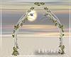 H. Blush Arch V2