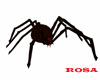 Brown Rex pet spider