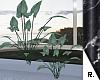 ♥ Plant 5