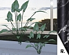 e Plant 5