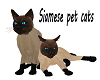 Siamese Cats *Pet  *M/F