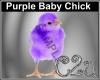 C2u Purple Chick