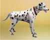 Realistic Dalmatian Pet