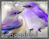 AM:: Purple Birds Enh