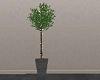[SM] Green Plant w Light