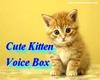 Cute Kitten Voice Box