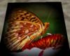 [W]Butterfly Streamer
