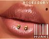 $ Double Lip Horizon V1