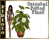 Oriental Potted Plant