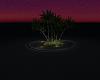Pink Dreams Island