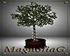 ~MG~ Twinkle Tree Plant