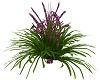 Purple Bell Plant
