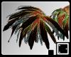♠ Shaman Feathers