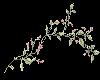 pink flower vine