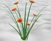 Blanket Flowers Resize