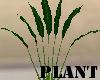 (A) Plant~ 7 Leafs
