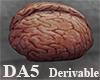 (A) Brain
