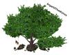 AOTW-Tree Posen Swing