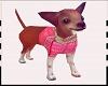 Chihuahua pink