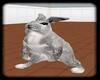 {D} Rabbit
